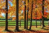 Autumn Scene 29595
