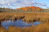 Autumn Marsh 29397