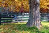 Fence Beyond Tree 29560