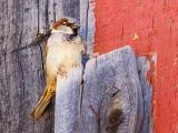 Bird on a Board