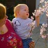Lilian Admiring Spring Blossoms 20060423