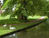 Mottisfont Swans Art