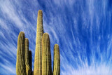 Cactus Against An Interesting Sky 20080301