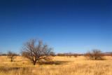 Desert Grassland 85388