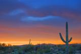 Desert Sunrise 86220