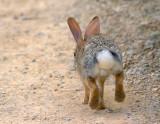 Hopping Down The Bunny Trail 86806