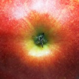 Apple Bottom 20080606