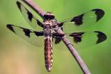 Dragonfly 20080607