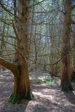 Stony Swamp 14462