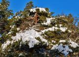 snow on tree.jpg