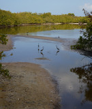 Cranes at Cats Eye Pond