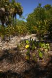 Tropical Island Flowers