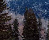 Balsams Wilderness