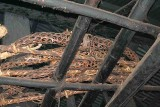 Baskets in which human skulls were kept and displayed in Monyakshu.