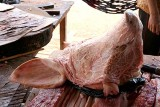 The pig`s head is covered, this means it is clean.