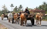 Farmers on their way home.