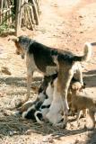 Thirsty Puppies