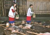 Myoko. Pigs are sprinkled with rice powder. Apatani tribe