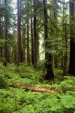 Oregon and Olympic Peninsula