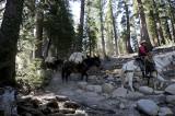 Passing Donkeys train