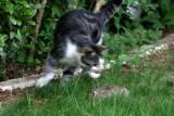 Pupuce a trouvé un lapin