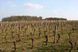 Les vignes à la fin de l'hiver