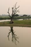 Le seul arbre du lac