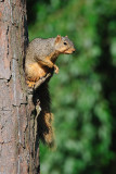 Tree Rat  :-)