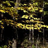 fall_09