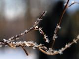 winter_1011