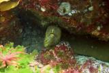 morray eel on the aldermans