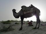 Taklaman Desert11.jpg