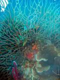 coral14.jpg