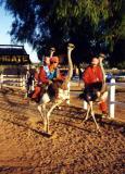 ostrich racing.jpg