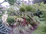 Chelsea Physic Garden, London, UK