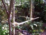 new jungle hut under construction