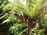 jungle.aug 2006