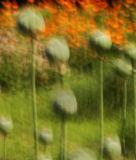 flora_movement