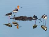 Smaller Birds
