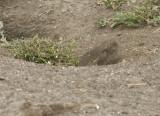 burrow.jpg