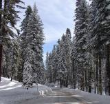 Entrance to Yosemite  on Hwy 120