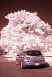Infrared Photography - Canon 40D