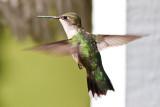 Humming Birds - Tuckerdale, North Carolina