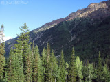 Fir forest and mountains