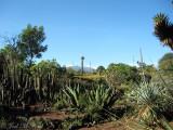 Jardín Botánico at UNAM