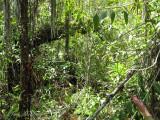 habitat of Lacandonia schismatica