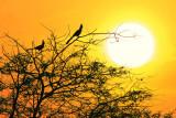 Hypnotic Sunset