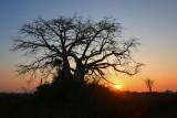 Baobab at Dande (1)