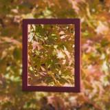 framed.jpg