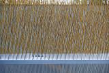 Prairie Grass in Brass.jpg